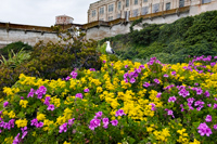 Alcatraz Island Colors